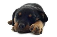 Volevo un cane nero! I test proiettivi per adulti e bambini