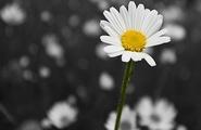 Il perfezionismo: pregi e difetti