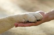 Pet therapy, un valido aiuto per i bambini autistici