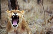 Gestire la rabbia: le 10 regole anti-collera