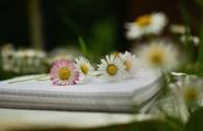 La meditazione migliora l'apprendimento