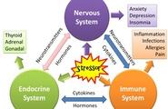 Stress e sistema immunitario