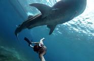 Blue Whale: gli effetti paradossi della viralità del web