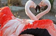 Un amore sano: cos'è e come si costruisce