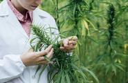Depressione e Cannabis