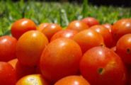 Cambiare alimentazione: facile a dirsi…