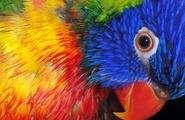 Gli effetti dei colori
