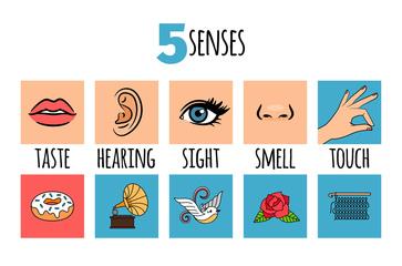 I 5 sensi, il nostro esplorare quotidiano
