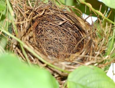 La sindrome del nido vuoto: dall'accudire al lasciar andare