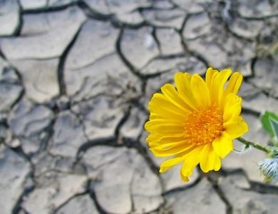 Resilienza: trasformare un fallimento in opportunità