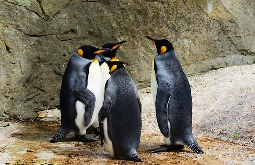 Il senso di appartenenza al gruppo e i gruppi significativi dell'individuo