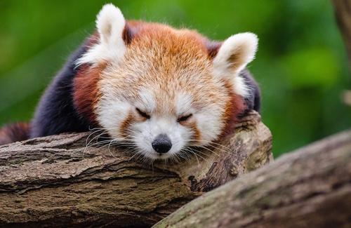 Giornata mondiale del sonno: migliorare la qualità del riposo